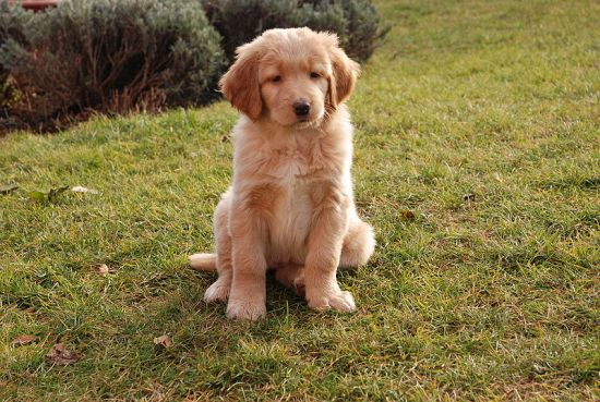 this puppy is misleading (via wikipedia commons)
