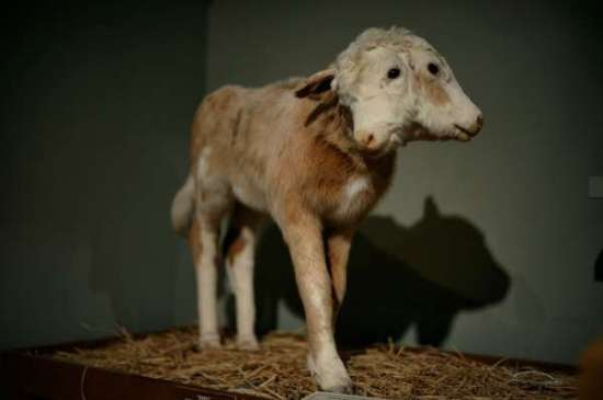 I AM NEVER GOING TO IMAGE SEARCH CREEPY TAXIDERMY EVER AGAIN. (via trendhunter.com)