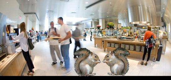 squirrel doppelgangers