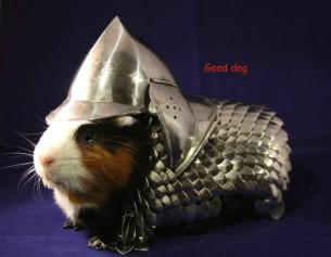 o-guinea-pig-armor-facebook