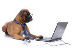 dog_at_laptop-resized-600