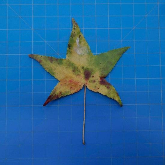 leaves-09693