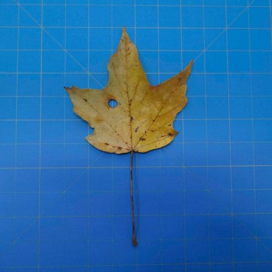 leaves-09694
