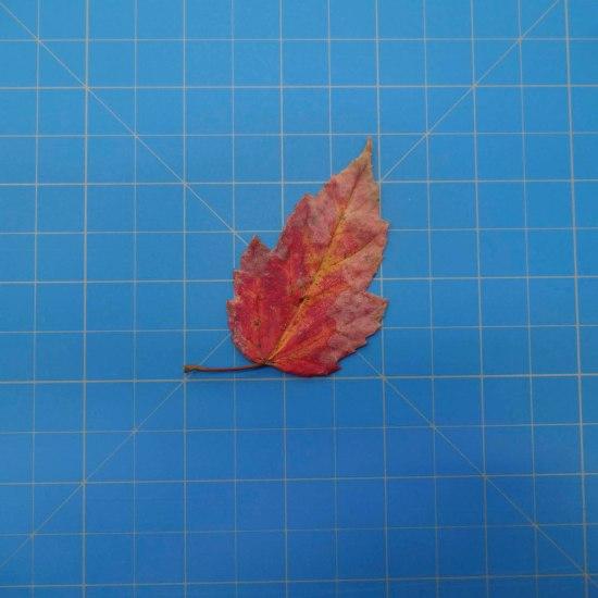 leaves-09696