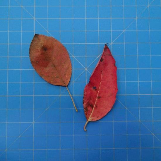 leaves-09697
