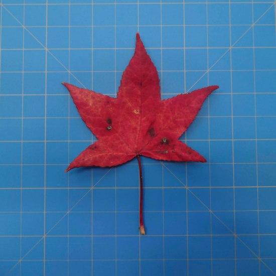 leaves-09699