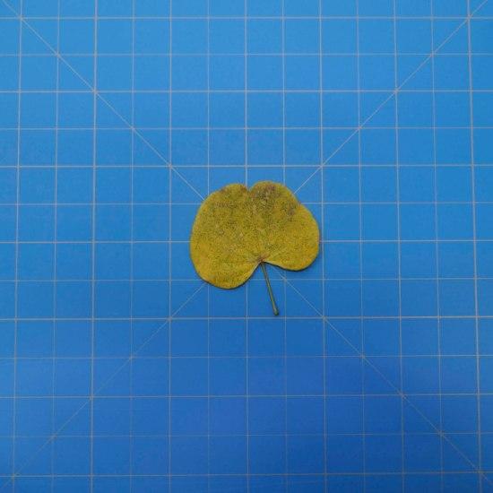 leaves-09700