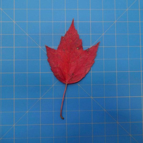leaves-09701