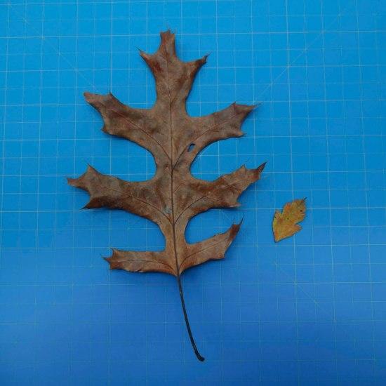 leaves-09703