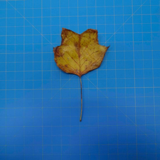 leaves-09705