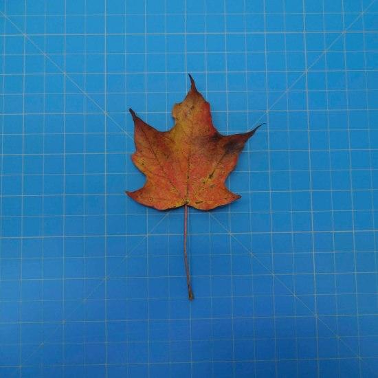 leaves-09706