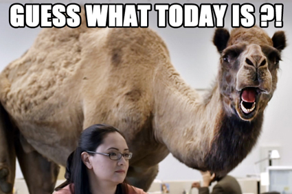 hump-day-camel_425