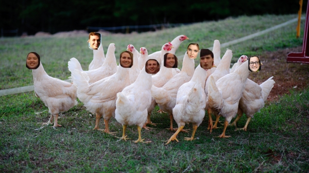 meatchickens-2.jpg