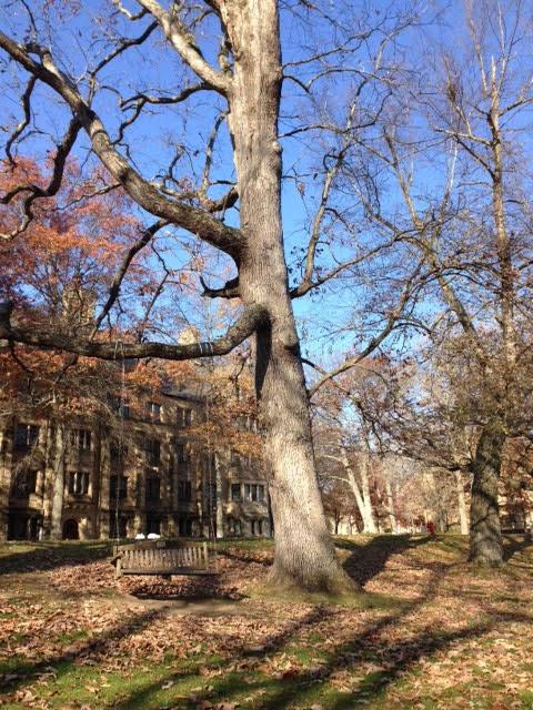 swing-tree