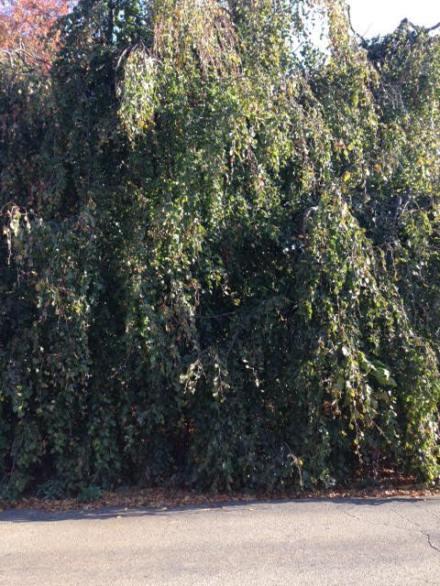 usd-tree
