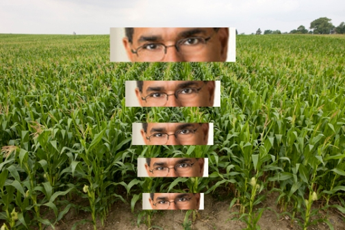 corn-field-2-lowres_6