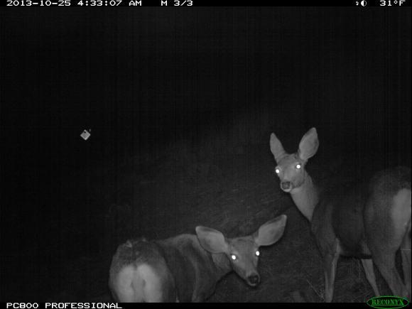 deer_crossing_281069713958329