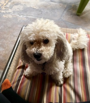 talia's dog